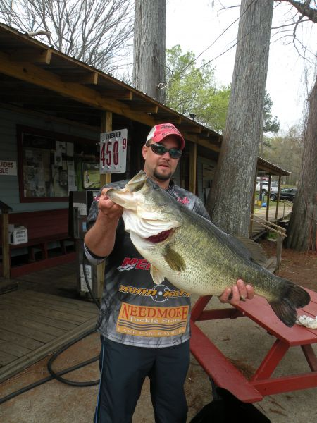 Caddo lake record bass caught again almost a year to the day for Bass fishing louisiana